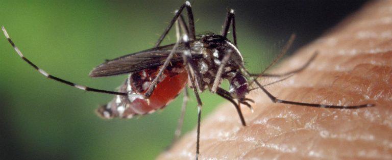 Pijnloze injectienaald dankzij mug