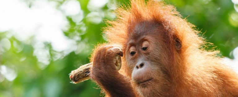 Willie Smits – Borneo Orangutan Survival Foundation