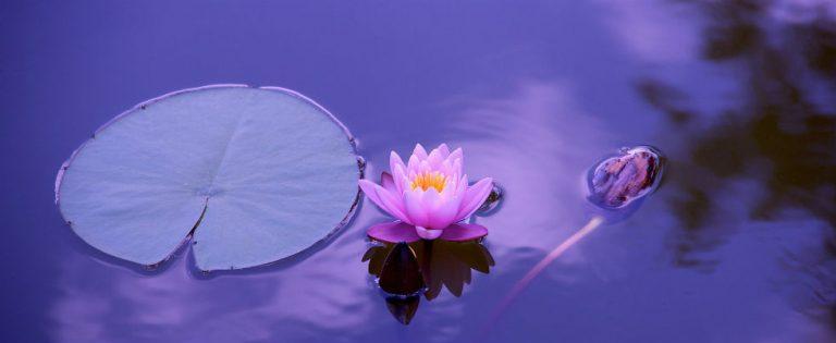Online cursus Mindfulness