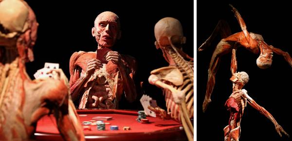 Body Worlds: tentoonstelling onder de huid