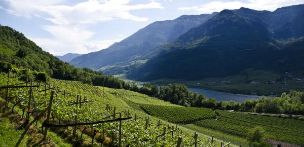 Zuid-Tirol: De kleinste wijnregio van Italië