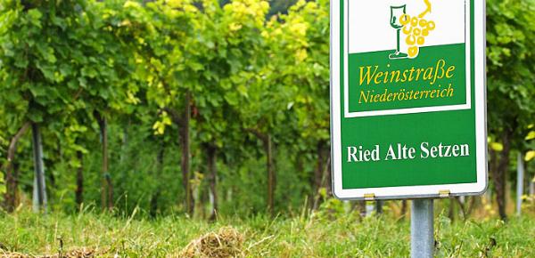 Koop met korting zuivere Grüner Veltliner wijn uit Oostenrijk
