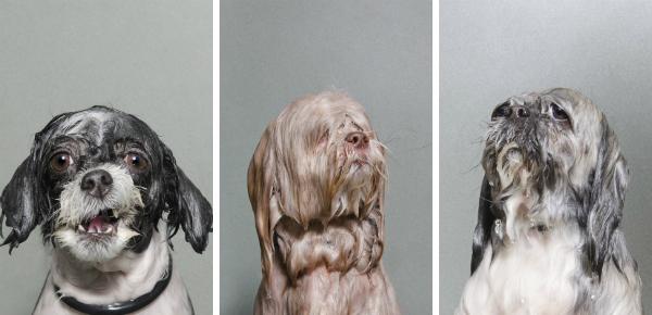 Lekker leedvermaak: zeik- en zeiknatte honden