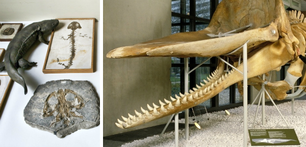 Fossielen kijken en dino's redden