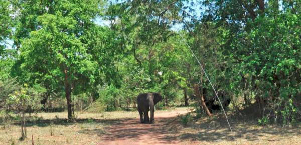 Achtervolgd door een boze olifant…