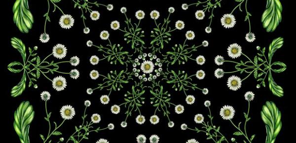 Bloemen – en blaadjeskunst