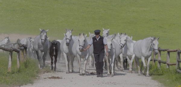 De zoektocht naar het perfecte paard