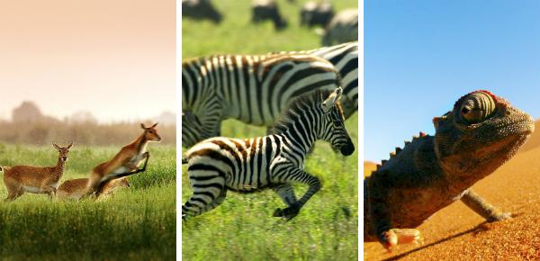 Nature: win deze prachtige documentaire