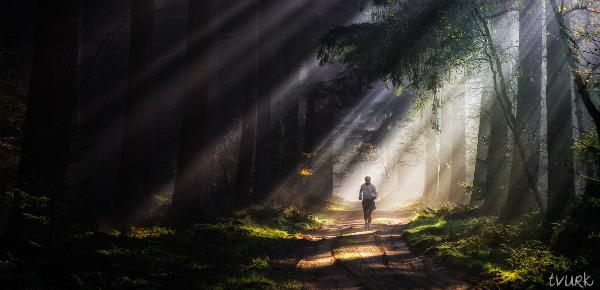 De betovering van het bos
