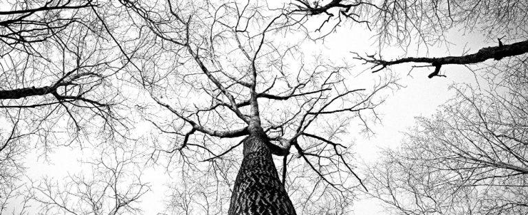 Het internet der bomen. Het bestaat.