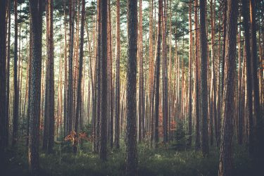 bomen communiceren