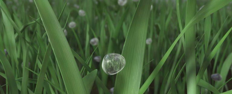 Ontdek het geheim van gras