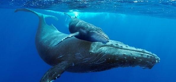 Win kaartjes voor Giant Whales