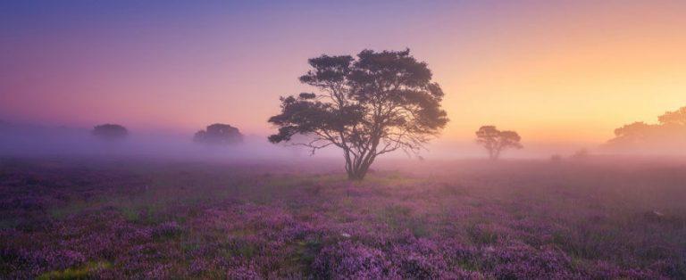 De mooiste foto's van Nederland