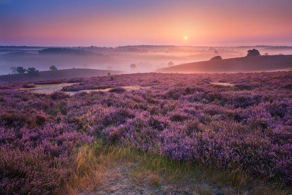 Purple-Hills-57d1119a80661__880