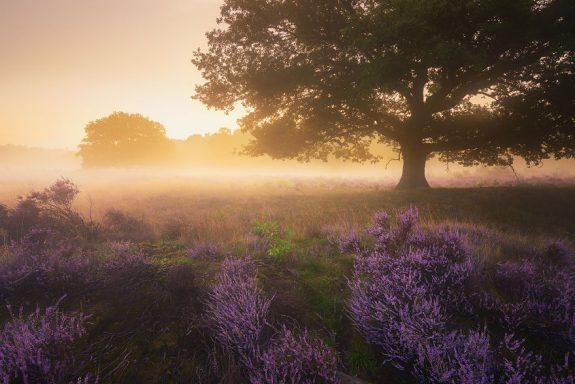 Trees-of-Silence-57d1118c326d0__880