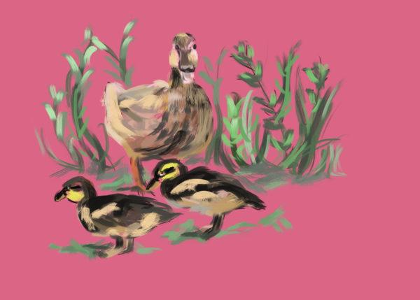 tekeningen dieren eendjes