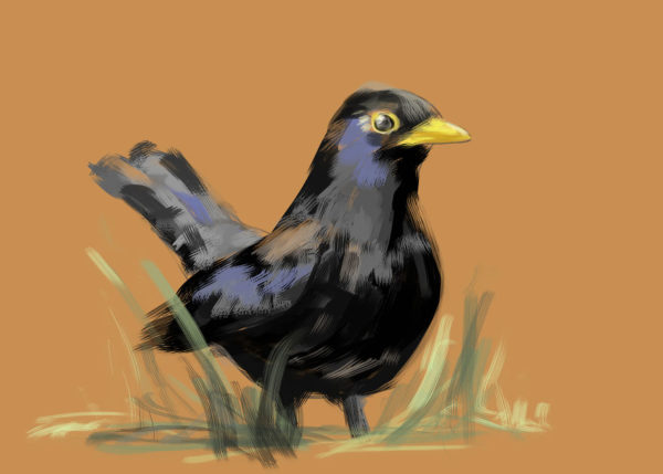 tekeningen dieren vogel