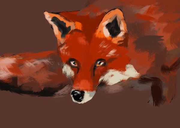 tekeningen dieren vos