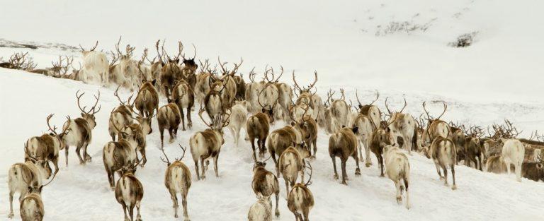 Ontdek de Europese wildernis in Les Saisons