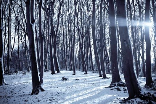 sneeuw5