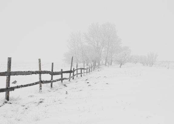 winter-nature-season-trees-65911