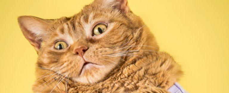 Deze fotoserie met mollige katten wil je zien