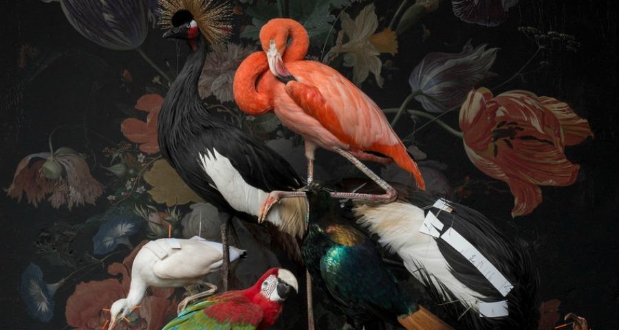 Dromerige flamingo's en bontgekleurde ara's