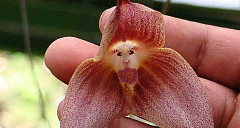Deze 6 planten zien eruit als dieren
