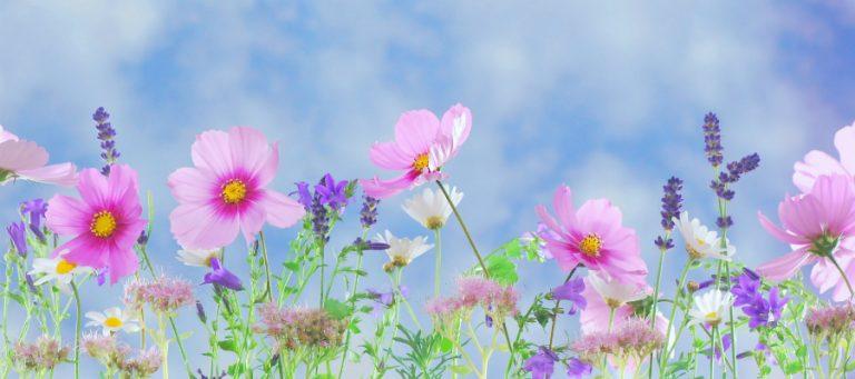 Beethoven zegt het met bloemen