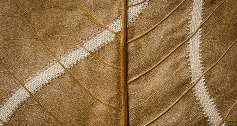 Susanna Bauer creëert met bladeren mooie kunstwerkjes