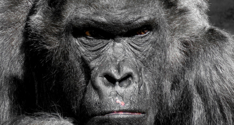 Een gorilla, Jezus en de Nijl