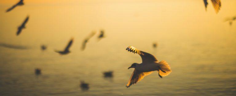 Vogels, vogels en nog eens vogels