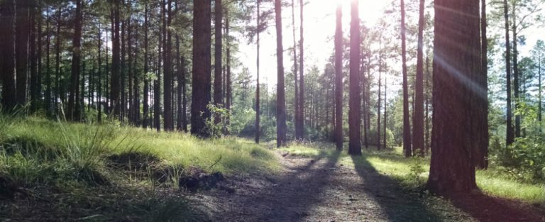 Shakespeare in het bos