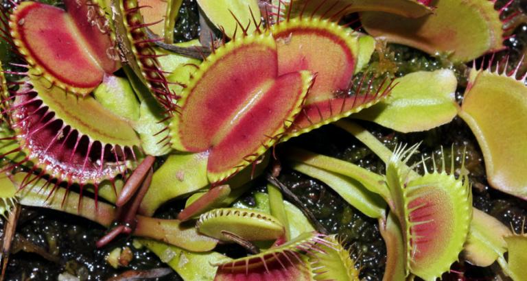 Vleesetende planten bekijken