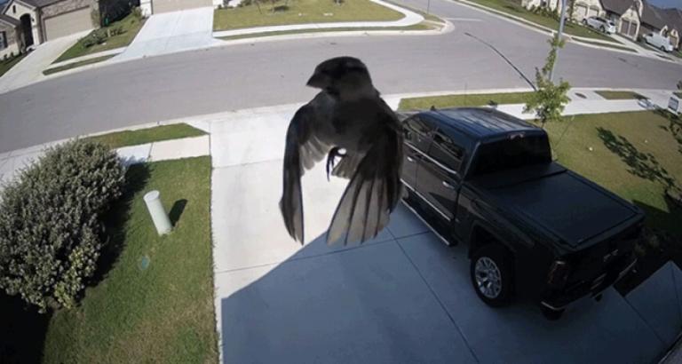 Vreemde vogel vastgelegd