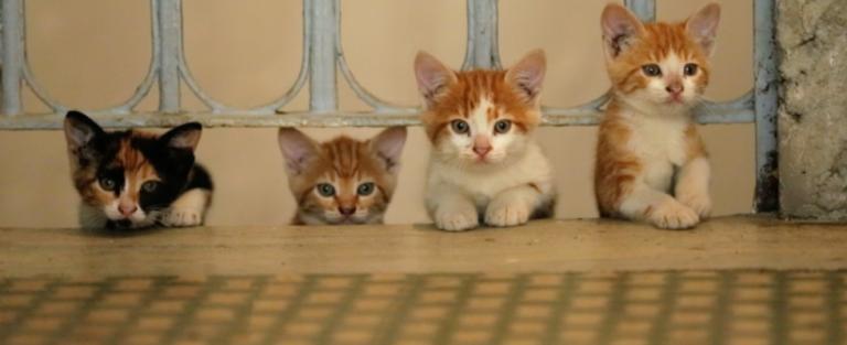 De katten van Istanboel