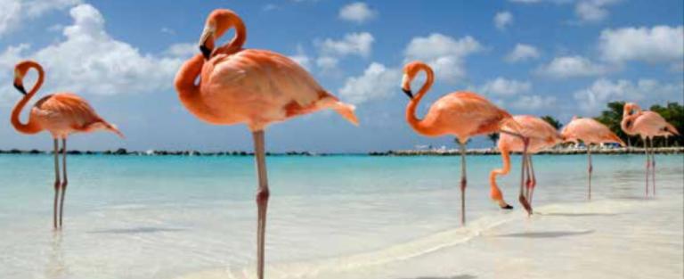 Aruba, het land van Arie Kok