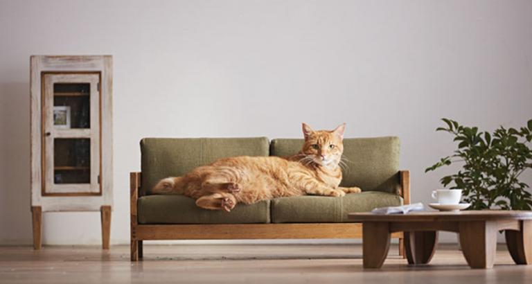 Kattenmeubels uit Japan