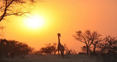 'Zambianen hebben het tevredenheidsgen'