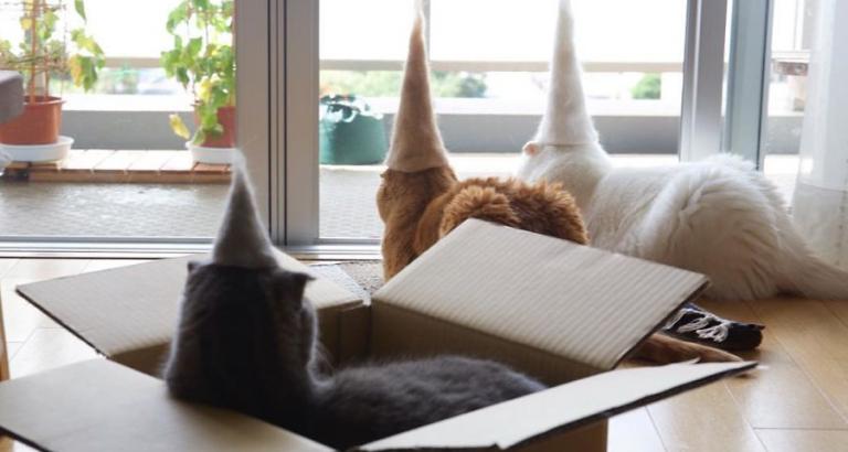 Katten met een kek hoedje