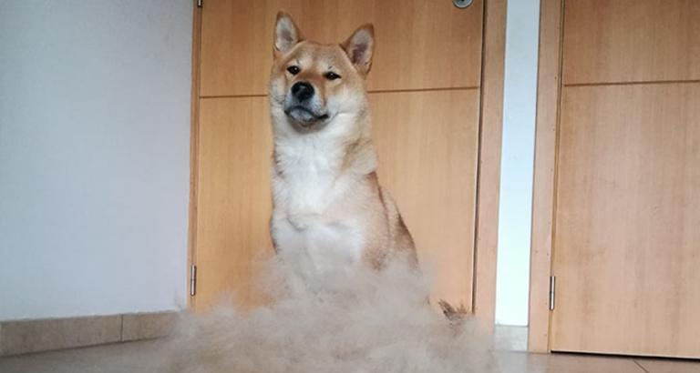Je hond opleuken