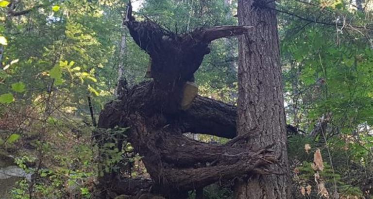 6 bijzondere bomen