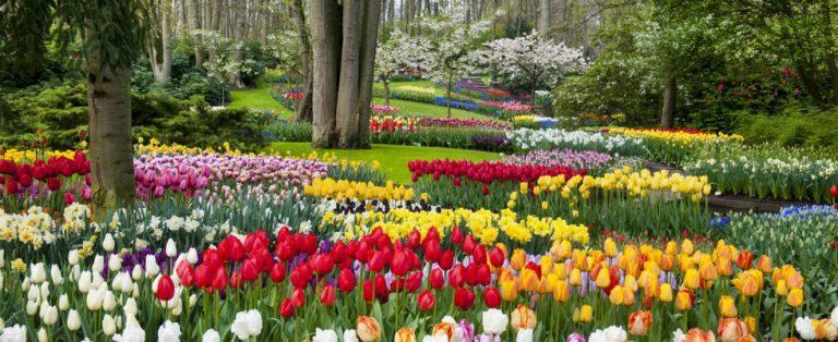 Het bloemenparadijs is geopend!