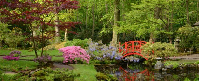De Japanse tuin gaat weer open!