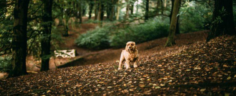 'Zo ver gaat de trouw van een hond'