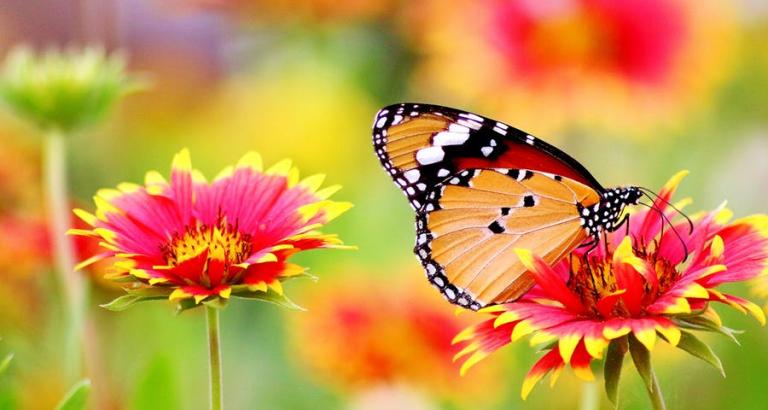 In een tuin vol vlinders