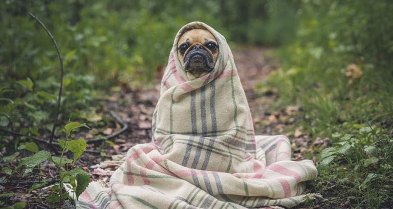 De grappigste dierenfoto's van 2018