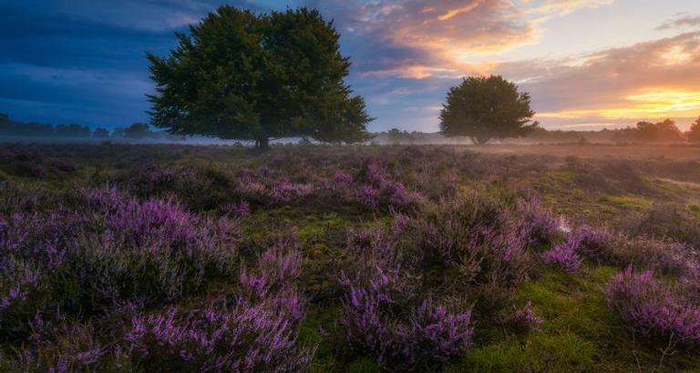Deze foto's van Nederland moet je zien