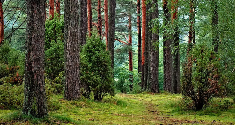 Win het Roots boswandelingboek!